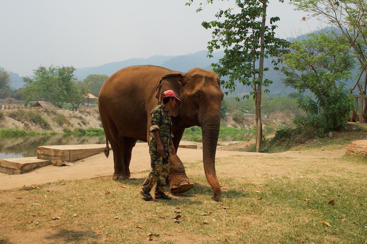 their life has so much suffering u0027 meet thailand u0027s elephant