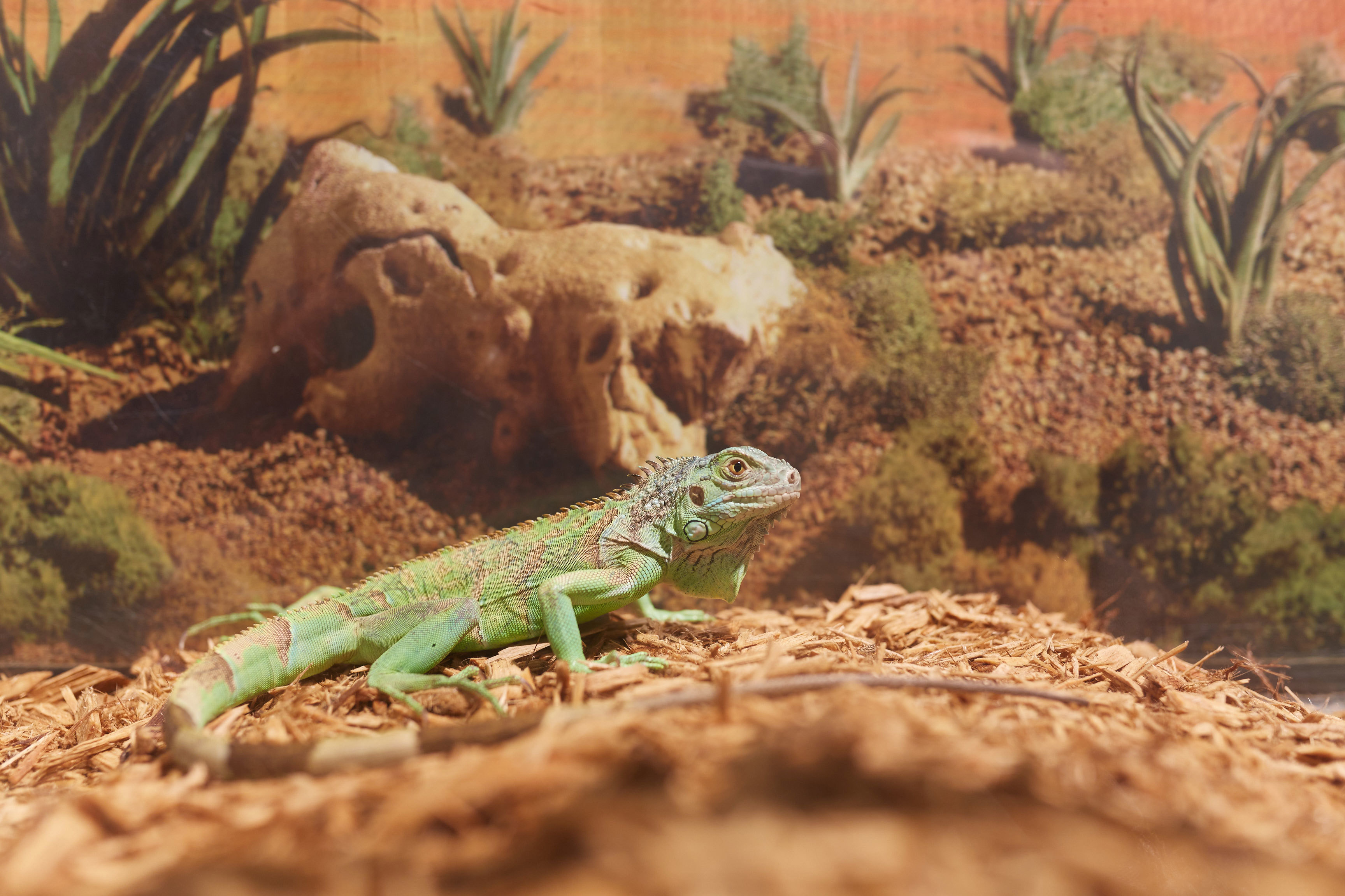 My Pilgrimage to the Reptile Expo, a Bleak Haven for Lizard People