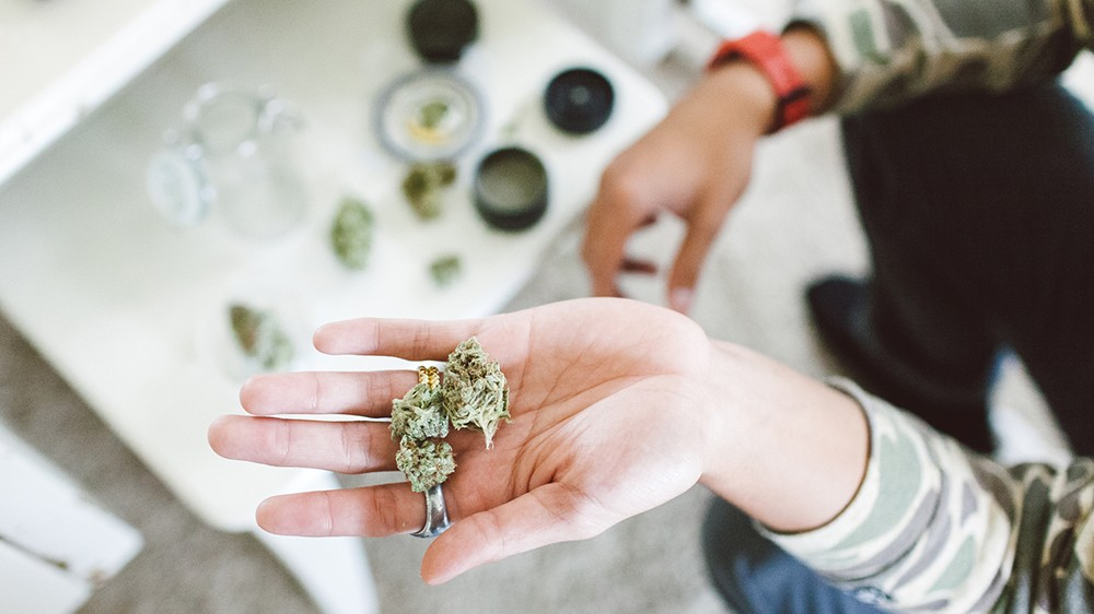 Higher Education: What Students Learn in Weed 101