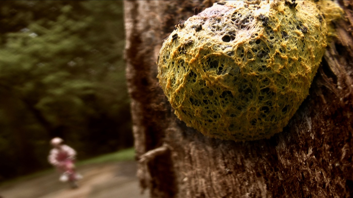 More Than You've Ever Wanted to Know About Plasmodial Slime Molds