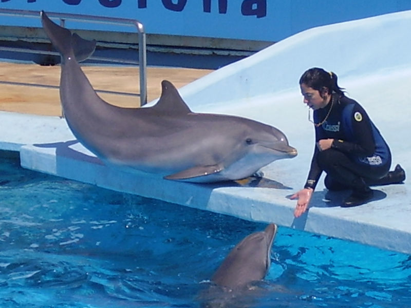 Dolphin Sex Abuse Whistleblower Calls Out Aquarium For -3459