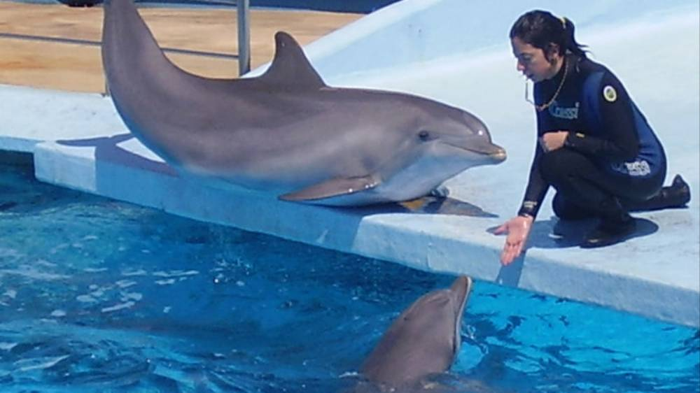 Dolphin Sex Abuse Whistleblower Calls out Aquarium for Jerking Off Sea Mammals