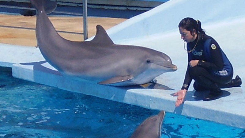 dolphin abuse whistleblower calls out aquarium for jerking off