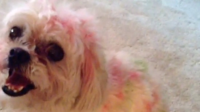 Watch This Dog Get Caught for Showing Its True Colors
