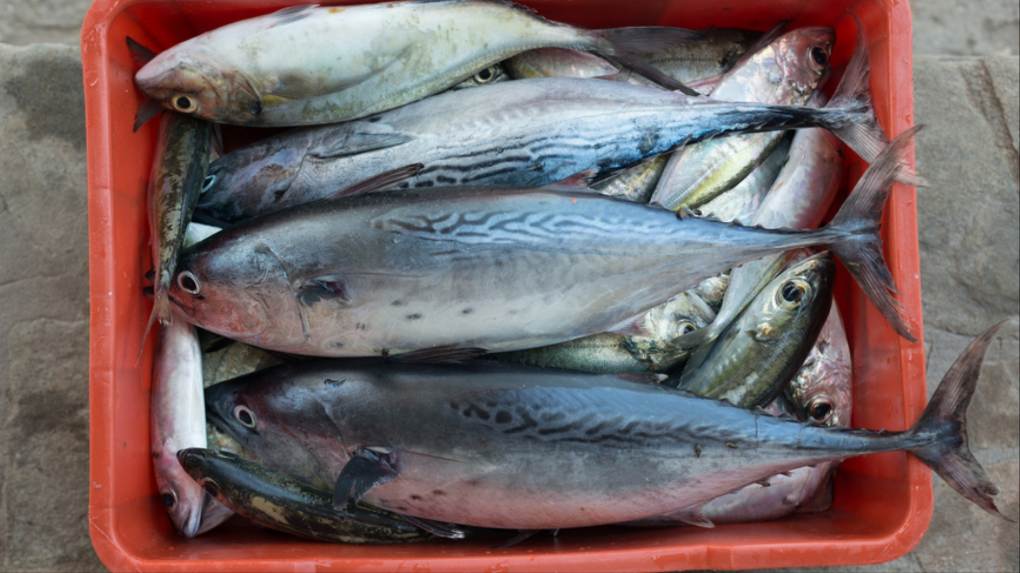 The Medical Condition that Makes You Smell Like Rotting Fish