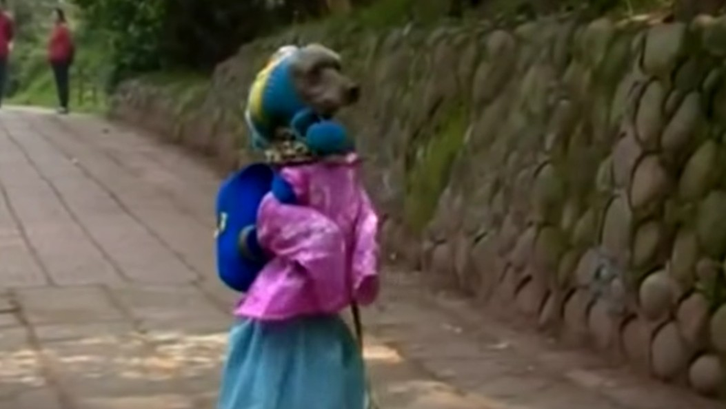 Watch This Adorable Poodle Walk to His First Day At School