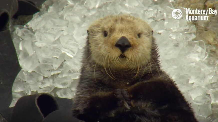 Watch This Otter Learn a Valuable Ice-Related Life Lesson