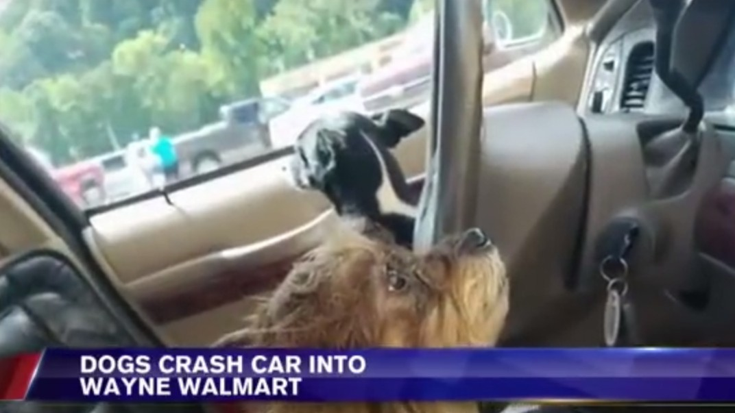 Weekend Inspiration: This Pair of Dogs Who Drove a Car into a Walmart
