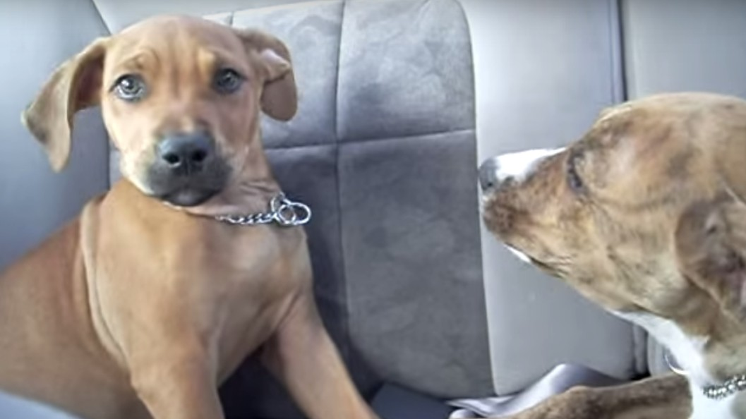 Two Dogs Talk Politics in Most Heated Debate You've Seen This Week