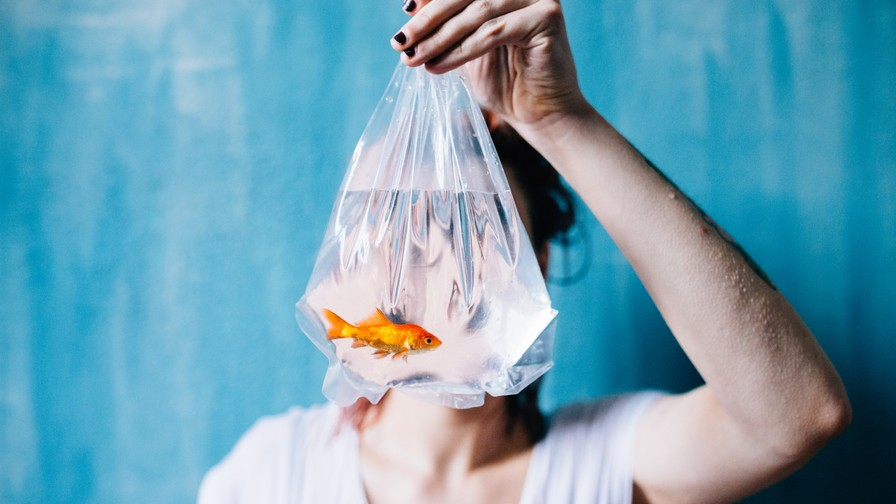 The Traditional Japanese Ceremony that Involves Women Feeding Booze to Fish