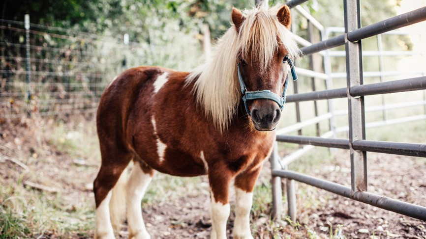 The Only Thing You Should Be Looking at Right Now Is This Story on Mini Horses