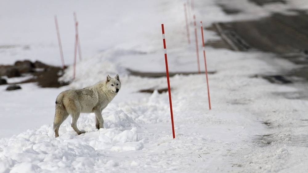 4-Year-Old Girl Walked Miles in Subzero, Wolf-Filled Siberia to Aid Sick Grandma