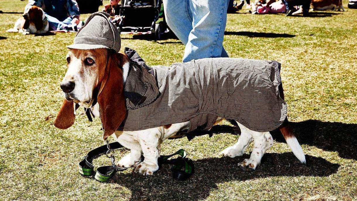 Photos of Basset Hounds Partying at the Jersey Shore