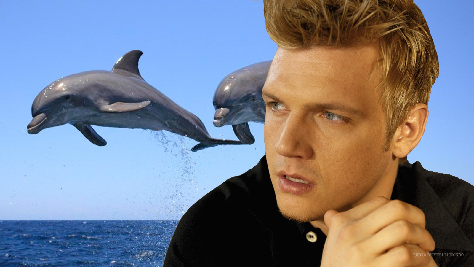 Remember When Nick Carter Vowed to Save the Dolphins