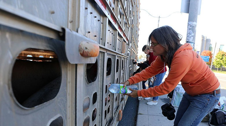 A Canadian Court Might Jail Woman for Giving Pigs Water